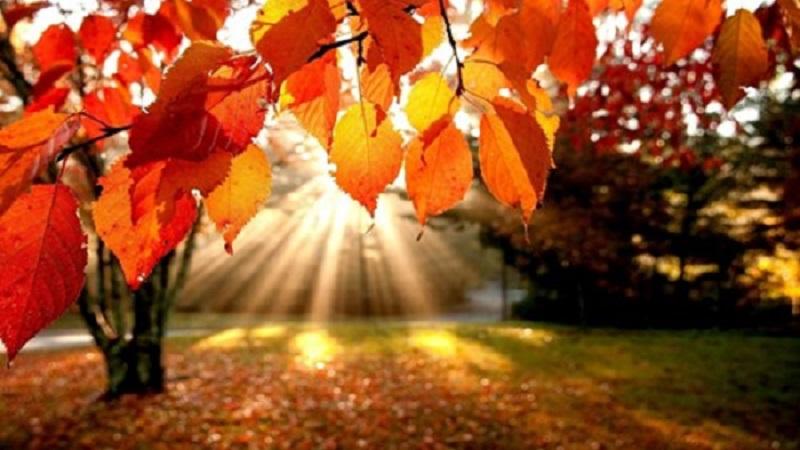 autumn sunrise through trees